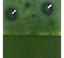 ESMALTE P/FLOAT JADE  (25 GR)