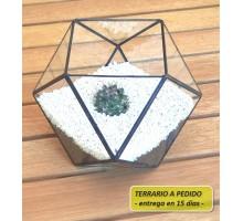 Terrario 9c De 24 X 17,4 Cm A Pedido